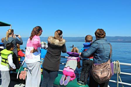 Orca Spirit Adventures Best Field Trip Ever!