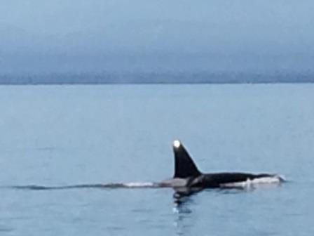 Whale Watching with Orc Spirit Adventures